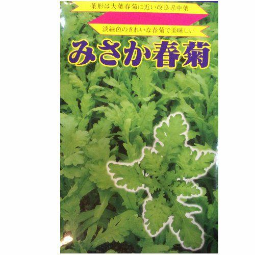 在来固定種野菜の種「中葉春菊」20ml〔約4600粒〕畑懐〔はふう〕