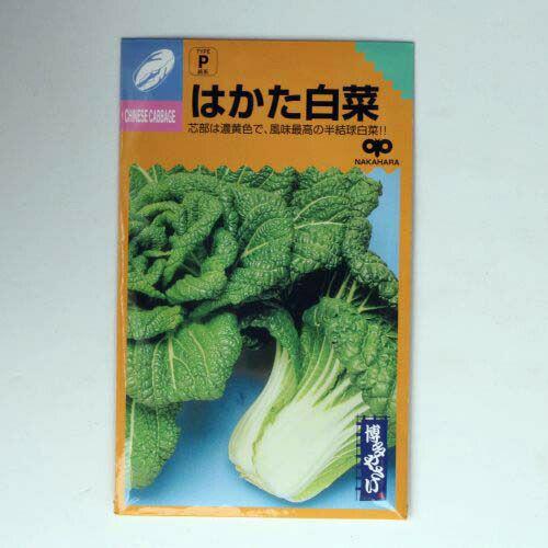 在来固定種野菜の種「はかた白菜」5ml〔約1050粒〕畑懐〔はふう〕