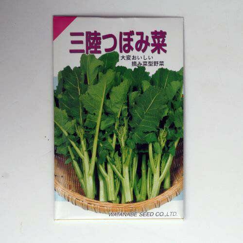 【秋蒔き野菜】在来固定種野菜の種「三陸つぼみ」5ml〔約1250粒〕畑懐〔はふう〕